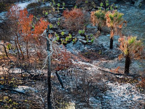 panorama usa plant tree landscape oak sand florida palm jupiter jonathandickensonstatepark em5markiihighres ©edrosack