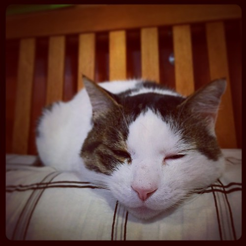 昼食も済んで、しらさわ有寿園のアイドル猫ブチくん、定位置のベンチで昼寝の準備に…。