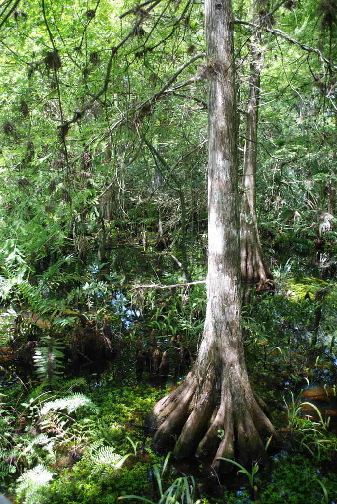 Fern Forest Nature Park Pompano Beach