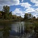 beaver pond by cbmn