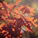Fall at Allaire 1