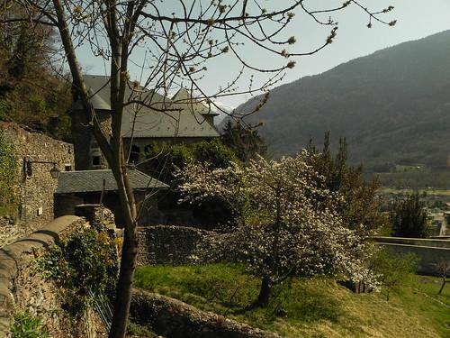 4 Cerisier en fleurs