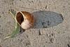 170/366 Snail Shell