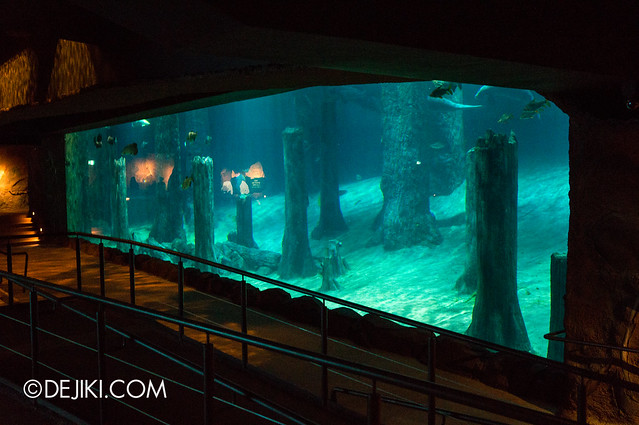 River Safari - Amazon Flooded Forest main display 3