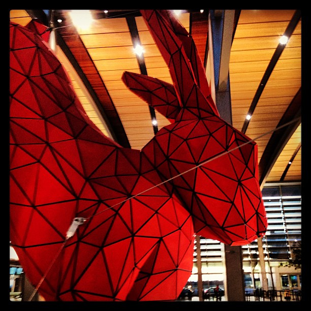 Rabbit. At the Sacramento airport.