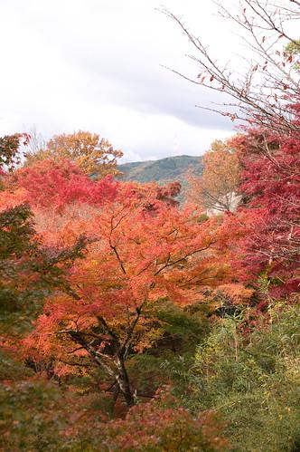 【写真】2012 紅葉 : 笠置山もみじ公園/2020-05-28/IMGP6126