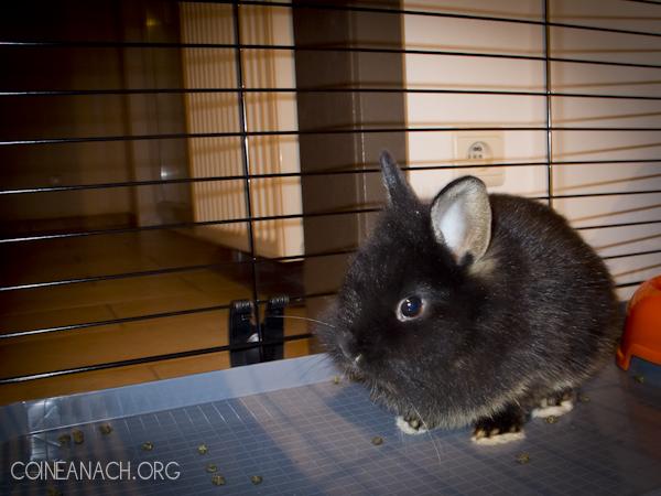 20120503_bunny_001