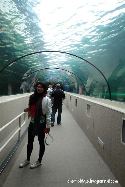 cherieladie in stingray tunnel
