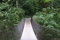 woodland(0.0), garden(0.0), trail(1.0), rainforest(1.0), suspension bridge(1.0), canopy walkway(1.0), green(1.0), forest(1.0), rope bridge(1.0), natural environment(1.0), jungle(1.0), walkway(1.0), biome(1.0), bridge(1.0),