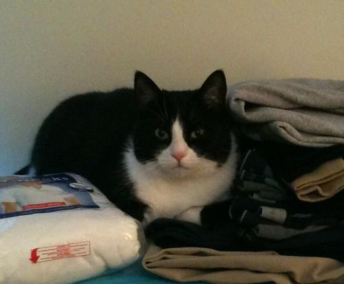 Tuxedo Cat 10