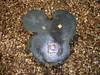 ミッキーの形をした切り株 ベルツの森