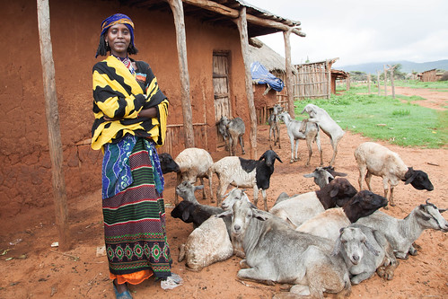 A young Borana girl takes care of her goats