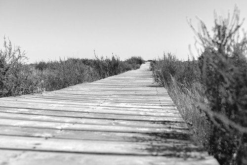 wooden planks ... [explored]