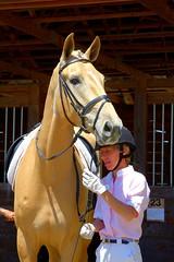 Horses - Dressage Show