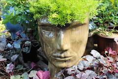 Succulent Crowns 1