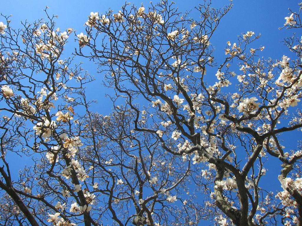 Festival Sakura Matsuri @ New York