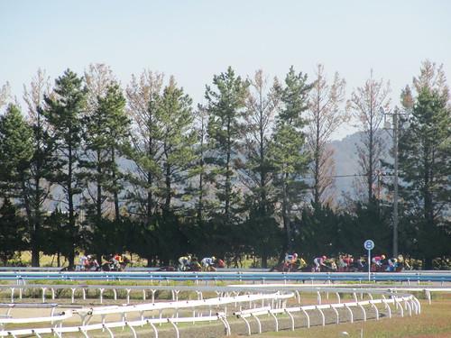 金沢競馬場の向こう正面を疾走する馬たち