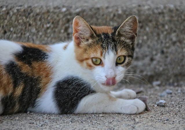 Greek Streetcat