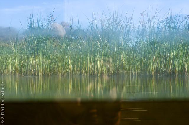 Reeds, Pentax K-5, Sigma 35mm F1.4 DG HSM