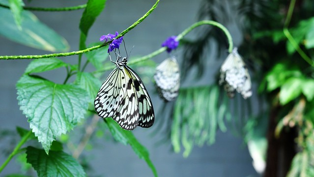 Butterfly conservatory, Cambridge Ontario