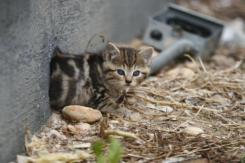 baby kitten #2