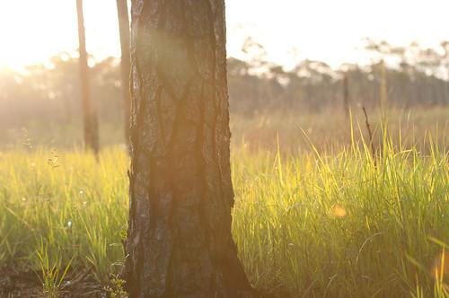 plants nature water sunrise landscape morninglight unitedstates florida 30a brackish
