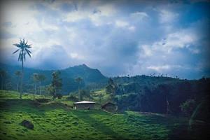 flora-bosque-parque-nacional-cutervo-cajamarca