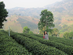 agriculture, shrub, field, mountain, valley, tree, mountain range, hill, hill station, plateau, meadow, rural area, plantation, mountainous landforms,