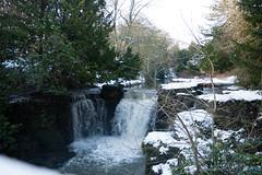 Winter 2013 (Jesmond Dene)  (10)