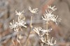 Dried flowers - Christmas Valley