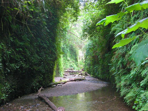 Fern Canyon 6