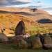 Lambs playing at Castlerigg Stone Circle. by Tall Guy