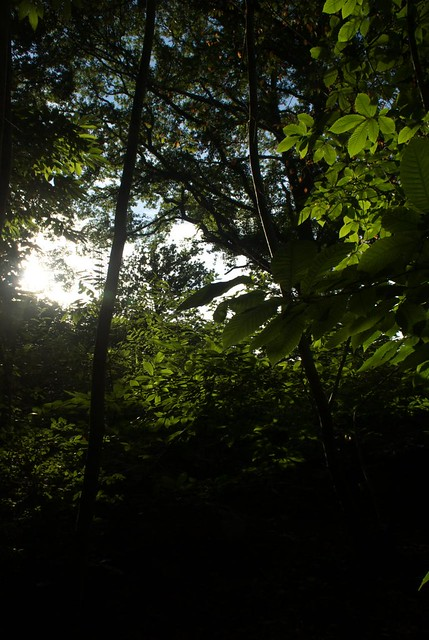 DSC_6873 Woodland