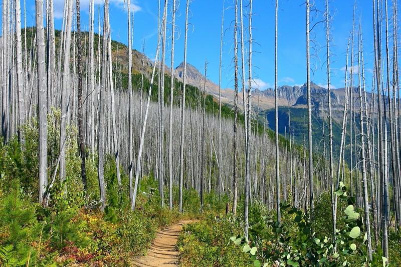IMG_4581 The Loop Trail