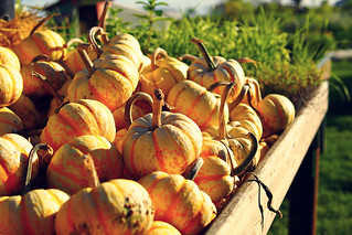 Squash & Pumpkin Season