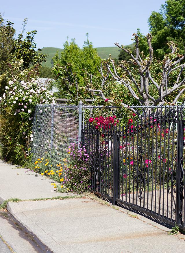 bright neighborhood flowers