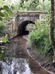 Pleine jungle - Photo of Montreuil-sur-Blaise