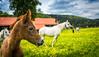 A little foal