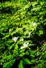 Web High Line 3 bigleaf magnolia