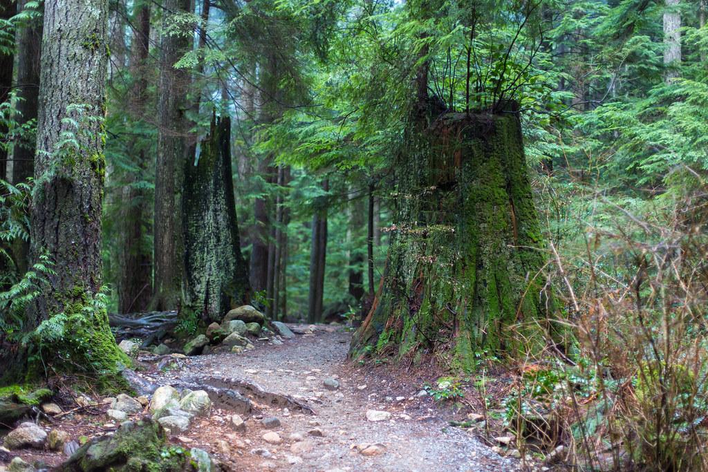 Norvan Falls Trail