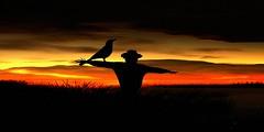 Scarecrow ..