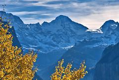 Lauterbrunnen , Murren, the walls of the Jungfrau mountain  , the summits of the Breithorn , the Tschingelhorn and the Gspaltenhorn.A view from Wengen. Canton of Bern, Switzerland.  No. 1348.