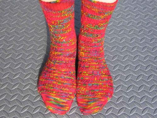 Scylla socks