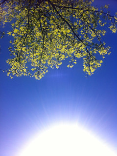 the simple things. laying under a tree. sunshine on your face.