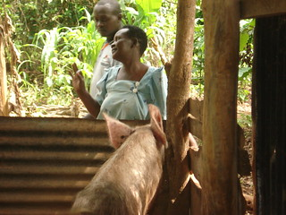 Kamuli district Uganda small piggery
