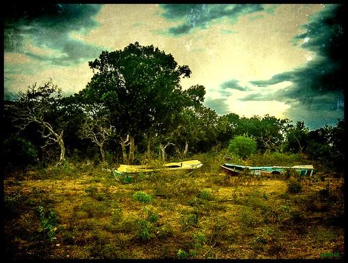 YALA NATIONAL PARK by régisa