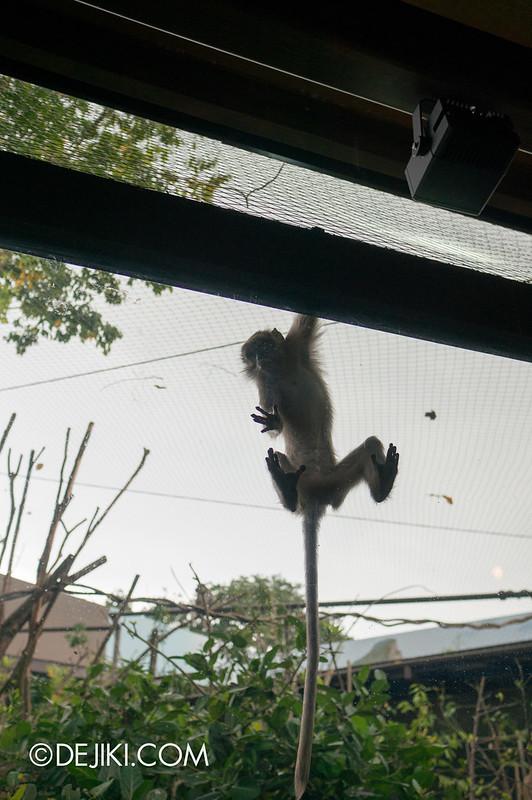 River Safari - Macaque Escape