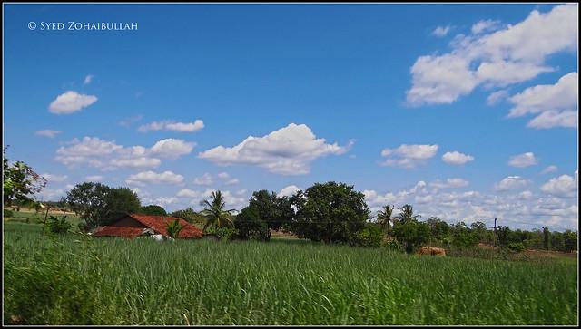 Haliyal fields