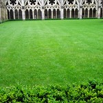 Salisbury Cathedral - Hedging Your Way Through the Cloisters...