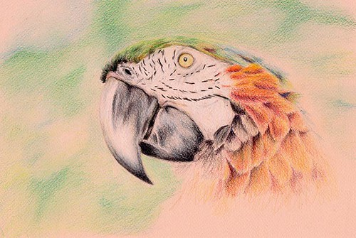 parrot13